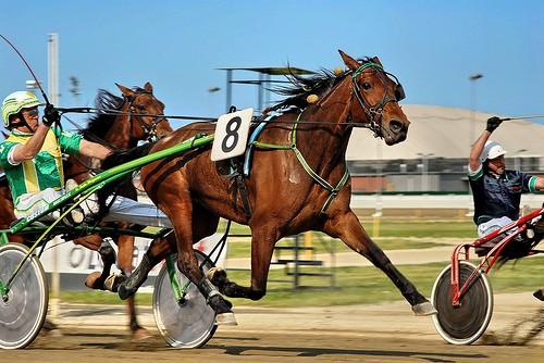 ippodromo-corse-cavallo